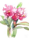 志村好子「カトレア(ピンク)」水彩画(絵寸317×409・額寸392×507mm)