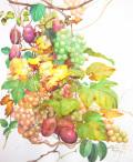 志村好子「秋の庭(アケビ・ブドウ)」(水彩画)画寸378×454mm)