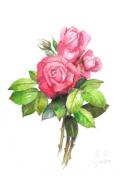 志村好子「薔薇」水彩(画寸160×242mm)