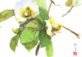 志村好子「椿」10・水彩(画寸128×185・額寸318×410mm)