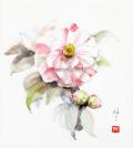志村好子「椿(白)」水彩画(絵寸270×240・額寸354×384mm)