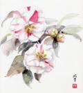 志村好子「椿」水彩・(画寸270×240mm)