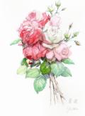 志村好子「薔薇」水彩画(絵寸250×330・額寸377×454mm)