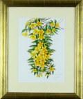 花の絵・ 志村好子 「ほのかに香る」黄色ミモザ 水彩 4号 外寸500×411mm