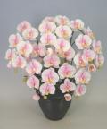 ♪本物そっくり 送料無料♪【光触媒】胡蝶蘭 大輪 桜ピンク 5本立ち