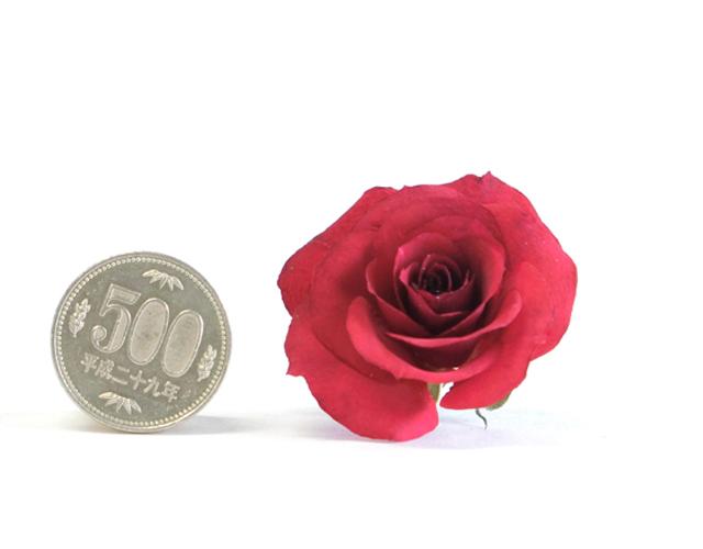 ボトルフラワー用ドライフラワー花材 (シリカゲルドライ) スプレイ咲バラ(5個セット)01