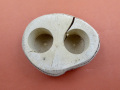 アウトレットエサ皿16g2個穴の画像