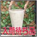 ショコラ 高級輸入鉢 コニックポット鉢 テラコッタ 丸筒型 プレーンデザイン  人気