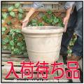 風合い テラコッタ鉢 植木鉢 輸入 高級 ショコラ 耐寒性 色ムラ