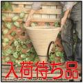 コーン型 ショコラ 横筋柄 アイアン脚付鉢 テラコッタ 高級輸入鉢 とんがり帽子型