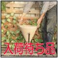 テラコッタ 植木鉢 ショコラ  コーンアイアン付 人気 耐寒仕様 チョコレート色  コーン横筋鉢