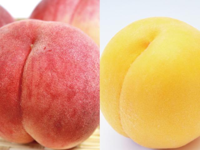 海谷農園 川中島白桃&黄金桃