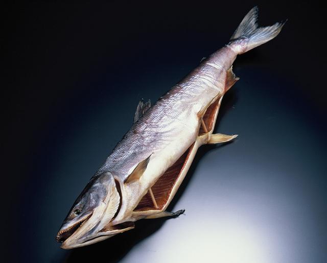 塩引鮭(塩引き鮭)