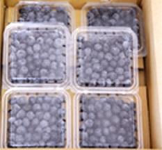 フレッシュブルーベリー(完熟) 100g 6パックセット