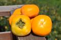 西吉野産 種なし柿 和-nagomi- 堀内農園