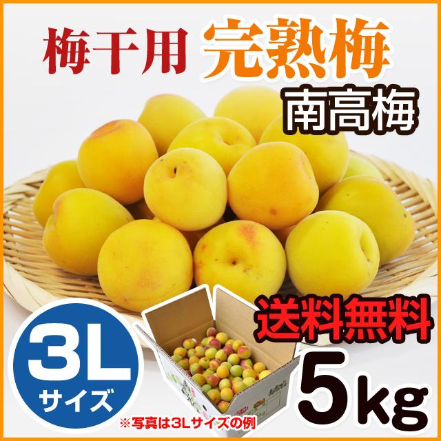 完熟梅 5kg 3L