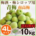青梅 南高梅 4L