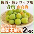 青梅 南高梅 農薬不使用(無農薬)