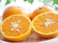 清見オレンジ(清見タンゴール)
