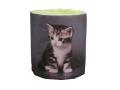 販促用トイレットペーパー 仔猫 アメショー 個包装100個 ダブル30m