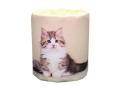 販促用トイレットペーパー 仔猫 マンチカン 個包装100個 ダブル30m