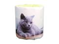 販促用トイレットペーパー 仔猫 ブリティッシュ 個包装100個 ダブル30m