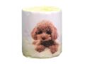トイレットペーパー 販促用 仔犬 トイプードル ダブル30m 個包装100個