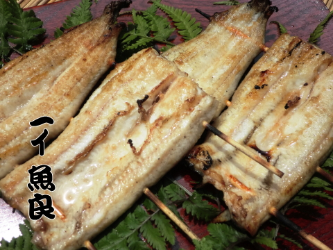 お店で活鰻を捌き炭火で丁寧に焼き上げています!【串付き国産鰻白焼きタレ山椒付属】 2串入~※頭肝骨素焼き有無ご選択頂けます
