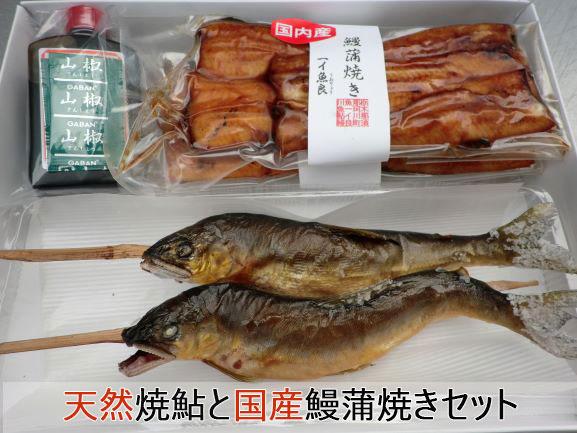 天然鮎は大きさ、塩焼き、素焼きご選択頂けます【炭火焼き天然焼鮎と国産鰻蒲焼き(山椒タレ付属)のセット】