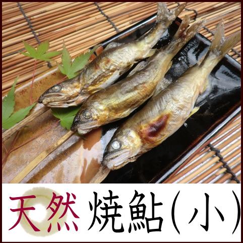 天然鮎ツウに人気!那珂川の恵みを丸ごと味わえます!一度食べたらクセになります!【天然焼鮎小サイズ】
