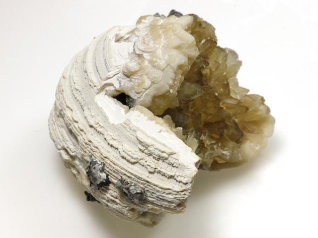 蛍光鉱物 方解石 二枚貝化石