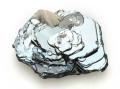 鉄のバラ ブラジル Diamantina産 01 メイン