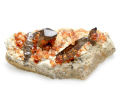 満礬柘榴石と煙水晶 母岩付き 01 メイン