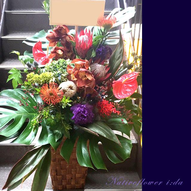 開店祝い お花 大きめアレンジメント ネイティブフラワーイーダ 東京花屋