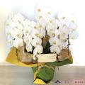 5本立て胡蝶蘭