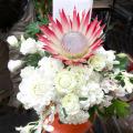 結婚祝い 花 アレンジメント プロテア ネイティブフラワーイーダ 東京花屋