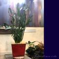 観葉植物 移転祝い 開業祝いに贈る 二子玉川の花屋ネイティブフラワーイーダ