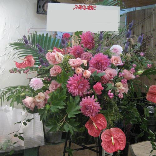 【お祝いスタンド花】プリティーダリア