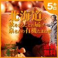 【送料無料】【予約・9月中旬頃よりお届け】北海道の秋をまるごとお届け! 「泉さんの有機たまねぎ(M サイズ込み玉)」5kg