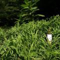 植物エキスがたっぷり!