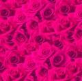 ローズまつり!5000円OFF!★ダマスクローズオイル(オットー)5ml+ダマスクローズウォーター 500ml /送料無料