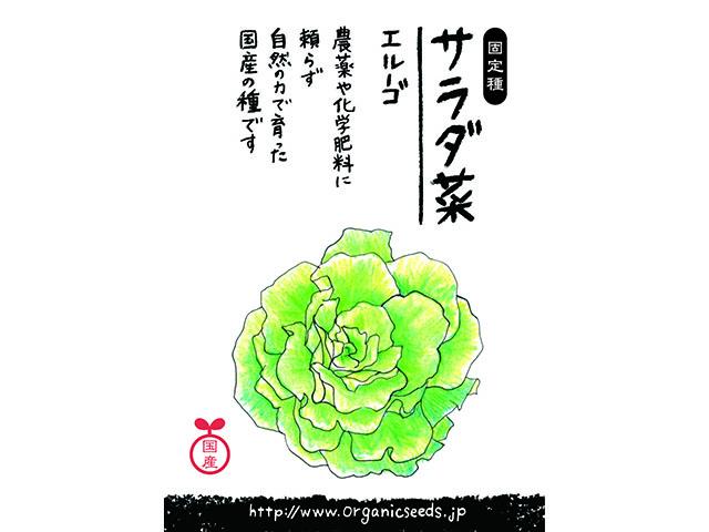 サラダ菜エルーゴパッケージ画像