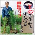 無農薬特別栽培米白米