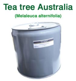 ティーツリー(オーストラリア産 ティートゥリー・ティートリー、Melaleuca alternifolia)/精油25lbs(約11kg)