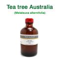 ティーツリー(オーストラリア産 ティートゥリー・ティートリー、Melaleuca alternifolia)/精油250ml
