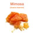 ミモザ・アブソリュート(インド産 モリシマアカシア、Acacia mearnsii)/固形精油10g