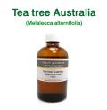 ティーツリー(オーストラリア産 ティートゥリー・ティートリー、Melaleuca alternifolia)/精油100ml