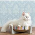 猫の可愛い段ボールツメトギ