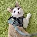 猫のベスト型ハーネス アッシュグリーン