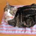 猫とひんやりクールマット レッド